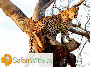 Content Marketing | Safari With Us